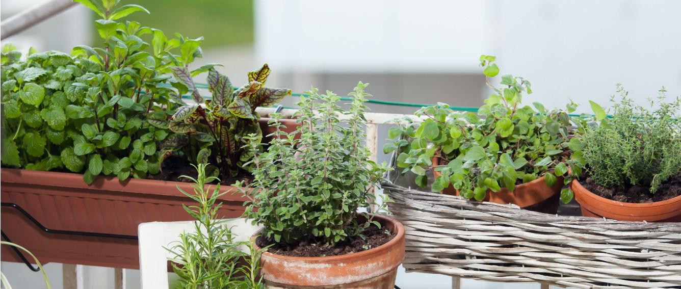no importa si vives en un apartamento en un tercer piso o en una casa sin patio preparar un huerto es fcil y tiene muchos beneficios
