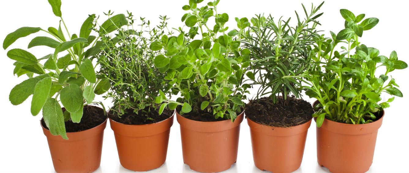Por dentro dietas y nutrici n un huerto casero para for Que plantas se siembran en un huerto