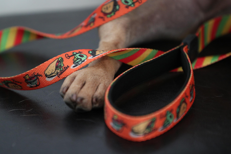 Toy Doggie es una línea de ropa y accesorios para mascotas diseñados en Puerto Rico por Viviana Rivera, una diseñadora de moda para mascotas certificada. En la foto, uno de los  accesorios diseñados por Rivera. (Juan Luis Martínez Pérez)