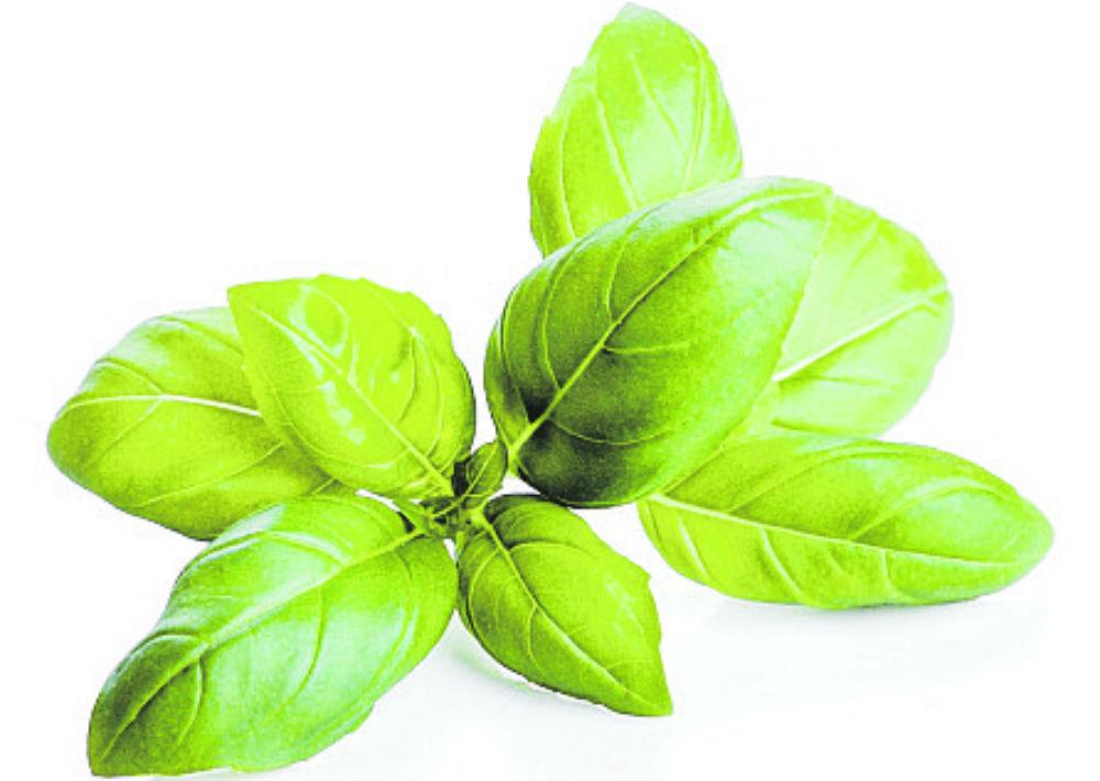 Albahaca: La albahaca contiene propiedades digestivas. Y aunque pueda sorprenderte, también puede aliviar el cansancio y la tensión corporal. (Shutterstock)