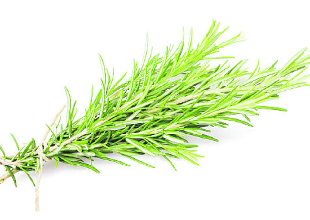 Romero: Tiene propiedades que ayudan a aliviar condiciones de la piel como la dermatitis. Se recomienda para detener la pérdida de cabello, diluido con un aceite de absorción fácil como el jojoba. (Shutterstock)