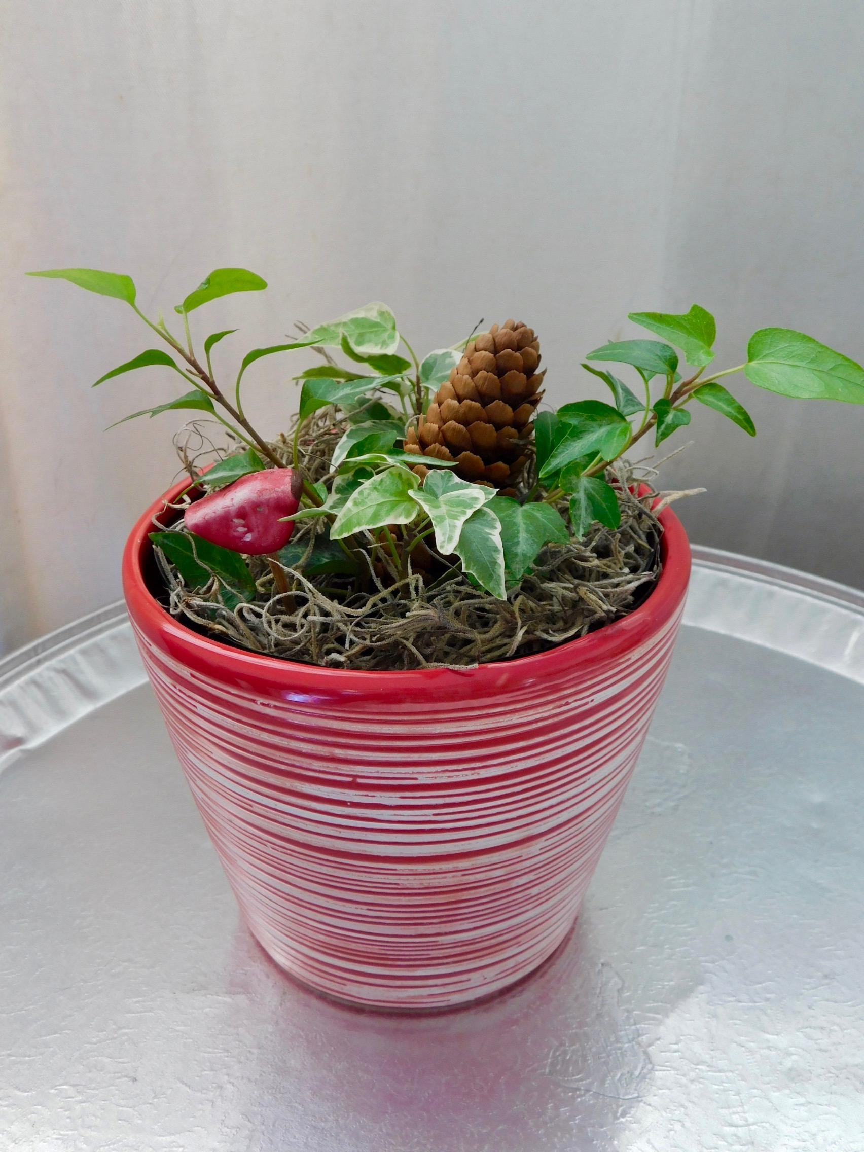 Decora con detalles pequeños y sencillo. En balance con la planta y el tiesto.