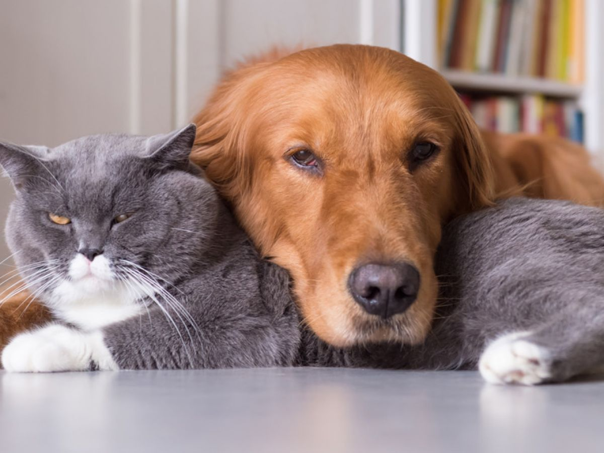 87d3c7c003dc Entre los nuevos servicios para perros y gatos están los  spas  a domicilio para  la comodidad de ellos y de sus humanos. (Shutterstock)