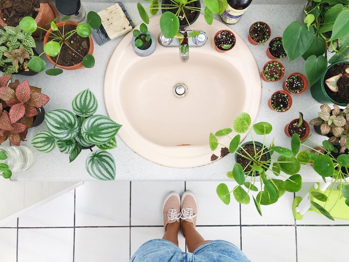 Renace el interés por las plantas