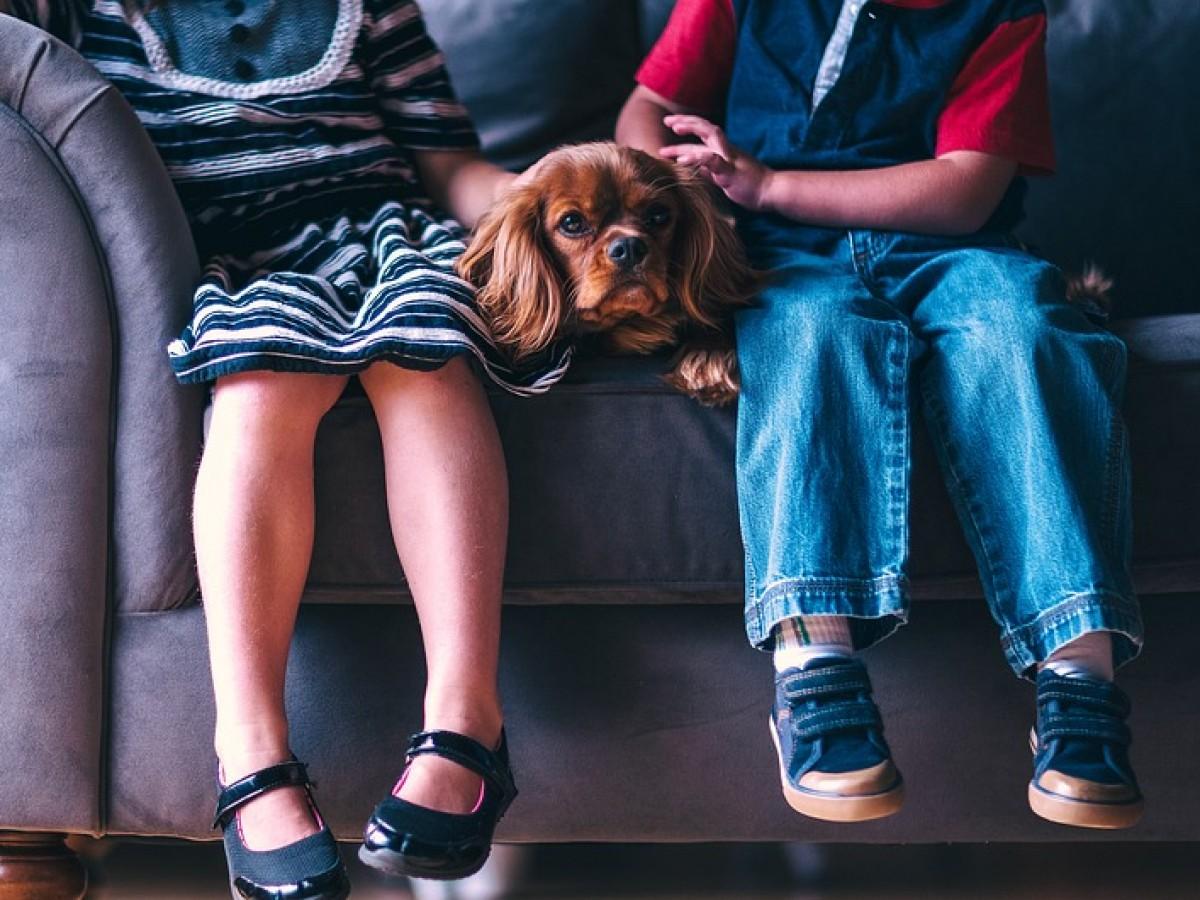 Cinco errores que cometemos con nuestras mascotas