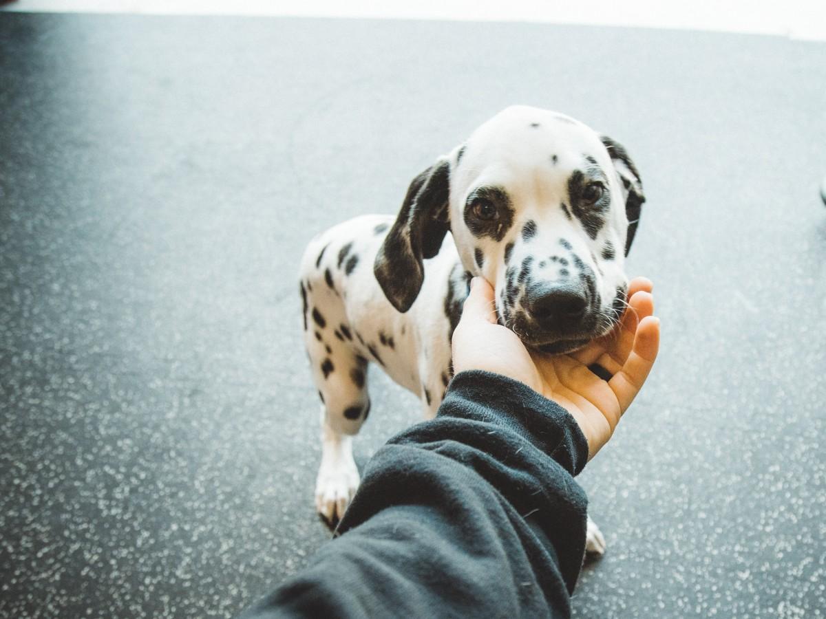 El trabajo con animales pone a prueba la salud mental