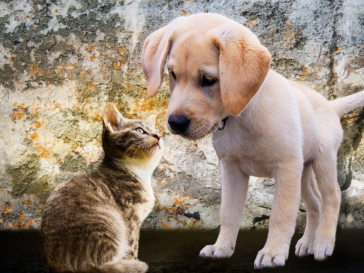 Guía para que tu mascota vaya al 'baño'
