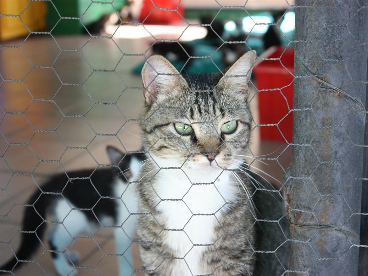 Consejos al llevar a tu gato al veterinario