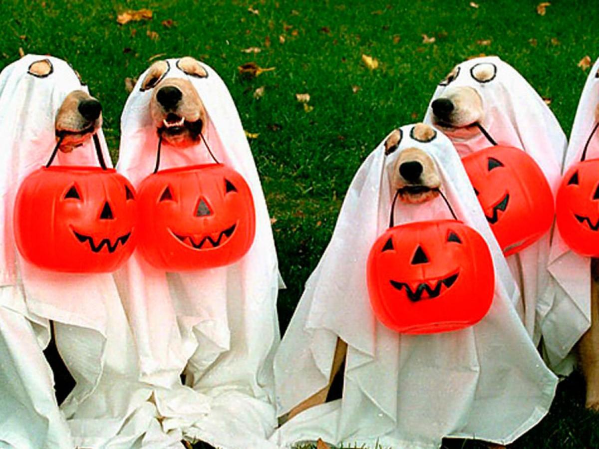 7 consejos para lograr que Halloween sea seguro para tus mascotas
