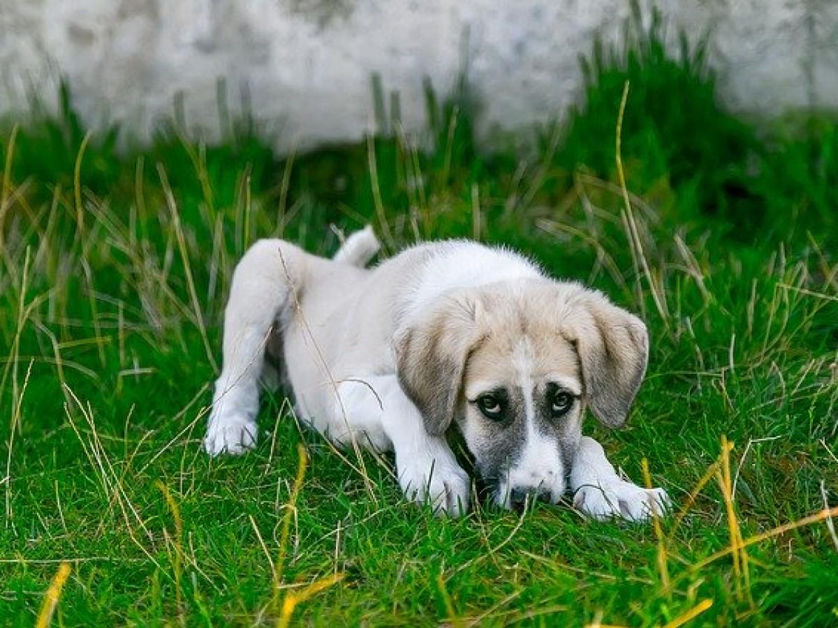 ¿Qué hacer si tu perro o gato se enferma o tiene un accidente?