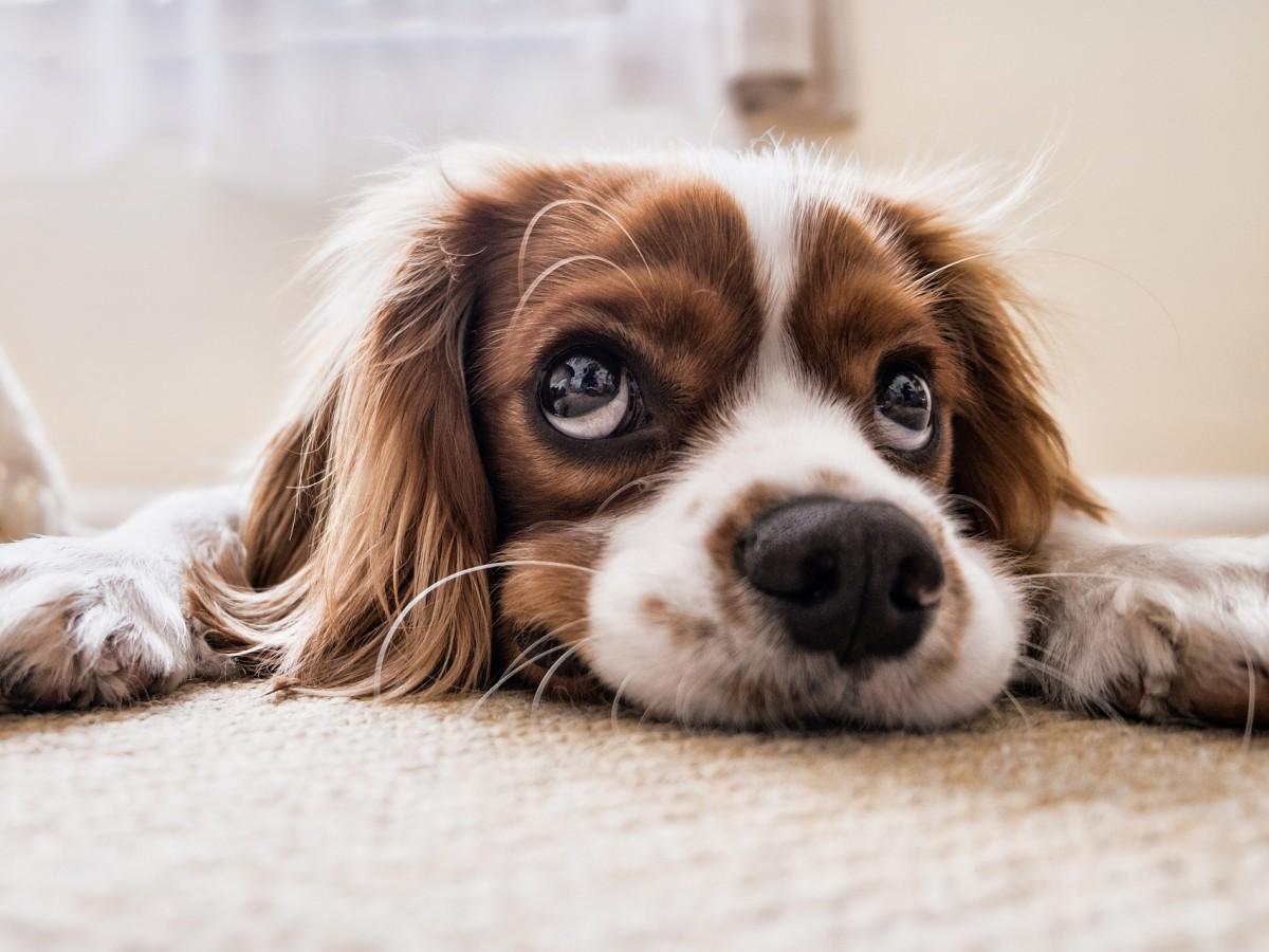 ¿Por qué tu perro te pone ojitos?