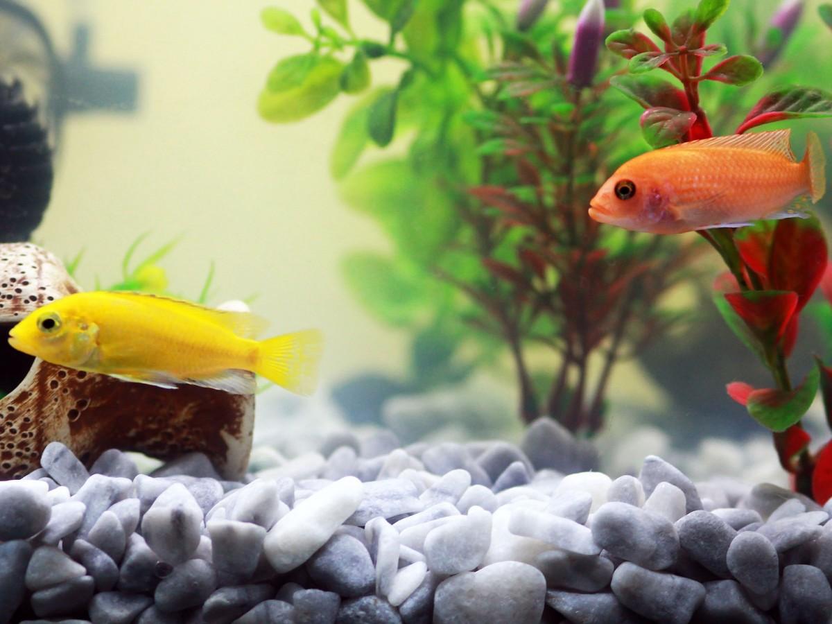 ¿Quieres tener un pez de mascota?