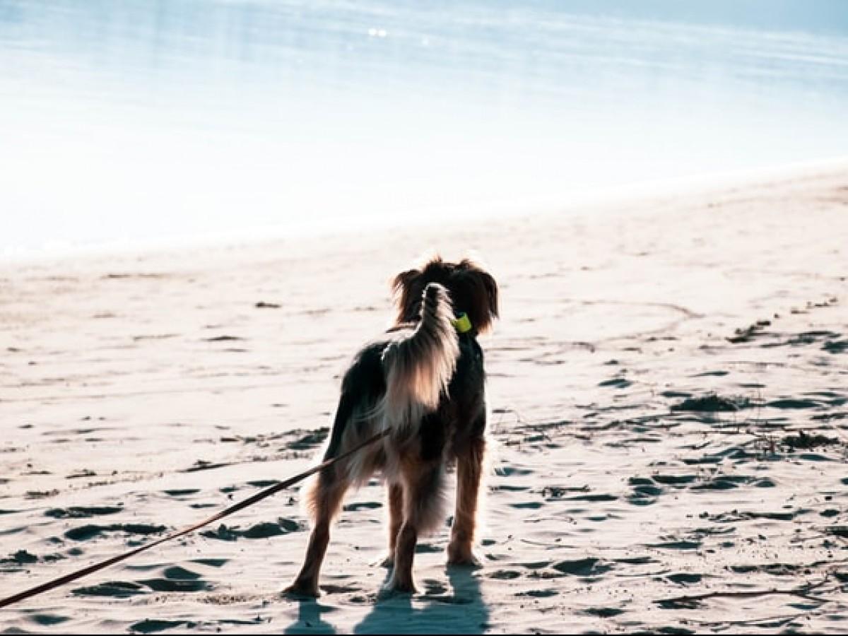 Aprende a conocer a tu perrito engreído: el lenguaje de la cola