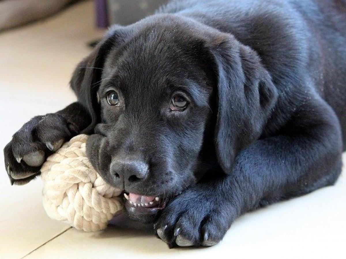 Actividades para nuestras mascotas en cuarentena