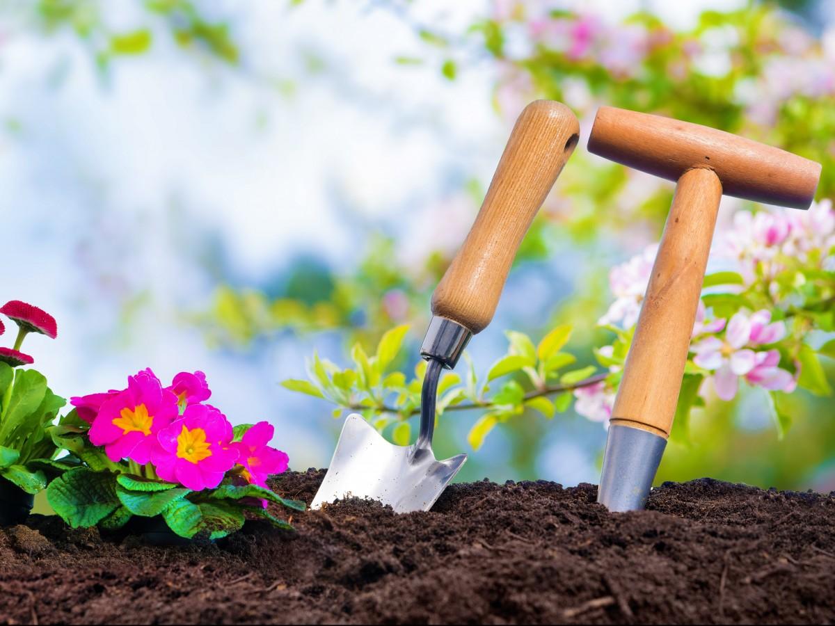 Lo que necesitas saber a la hora de empezar un jardín en casa