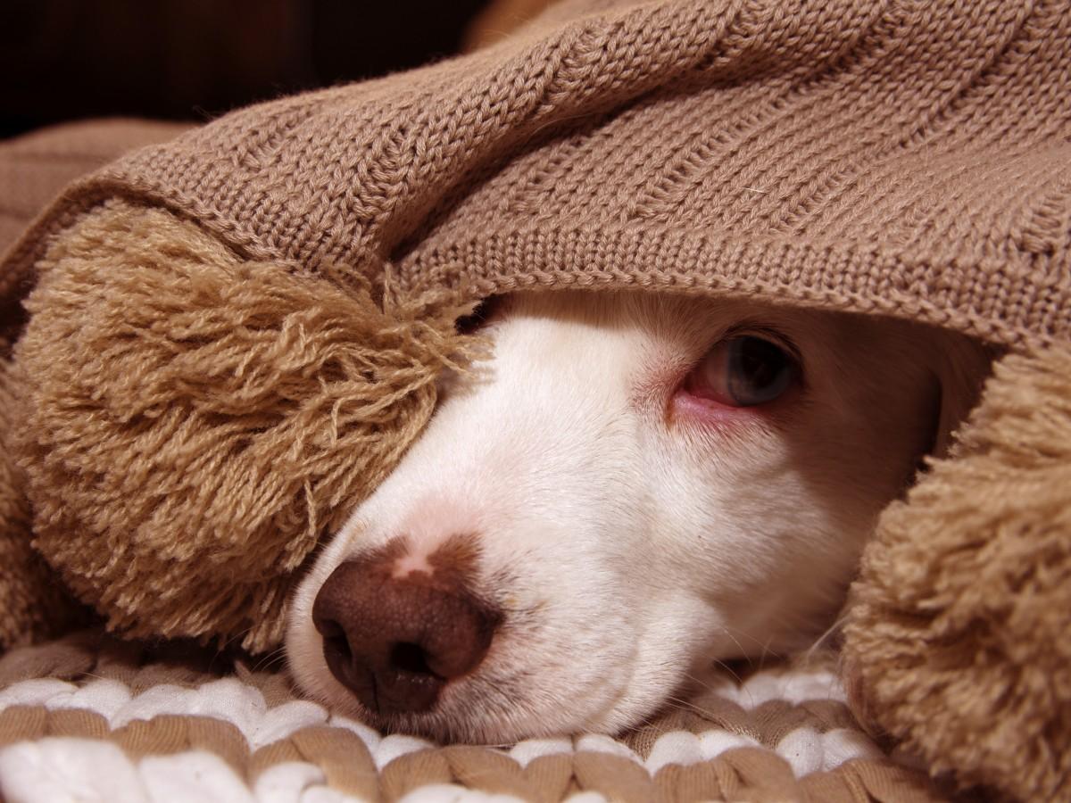 ¿Cómo proteger a nuestras mascotas de la pirotecnia?