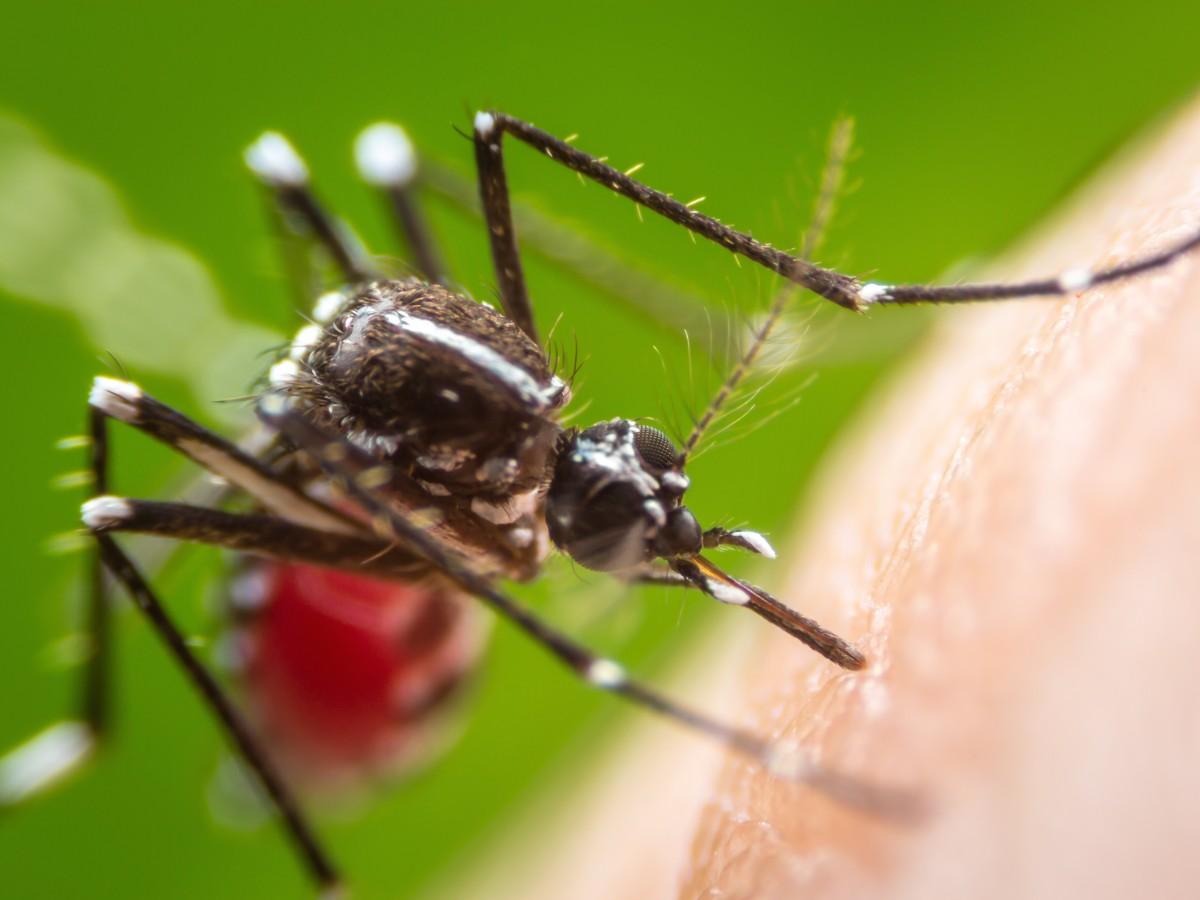 Departamento de Salud confirma ocho casos de dengue en la isla