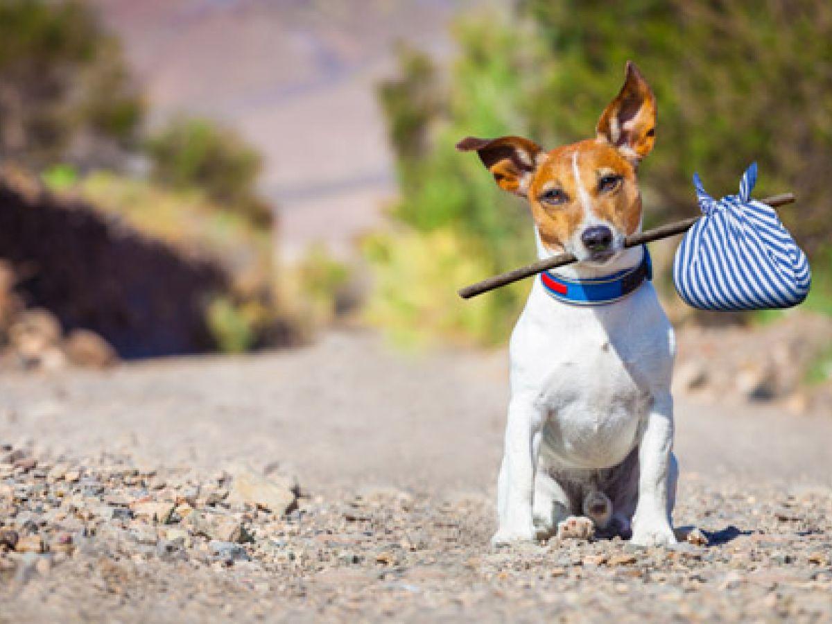 Muchos animales que se dan en adopción en la isla corren riesgo