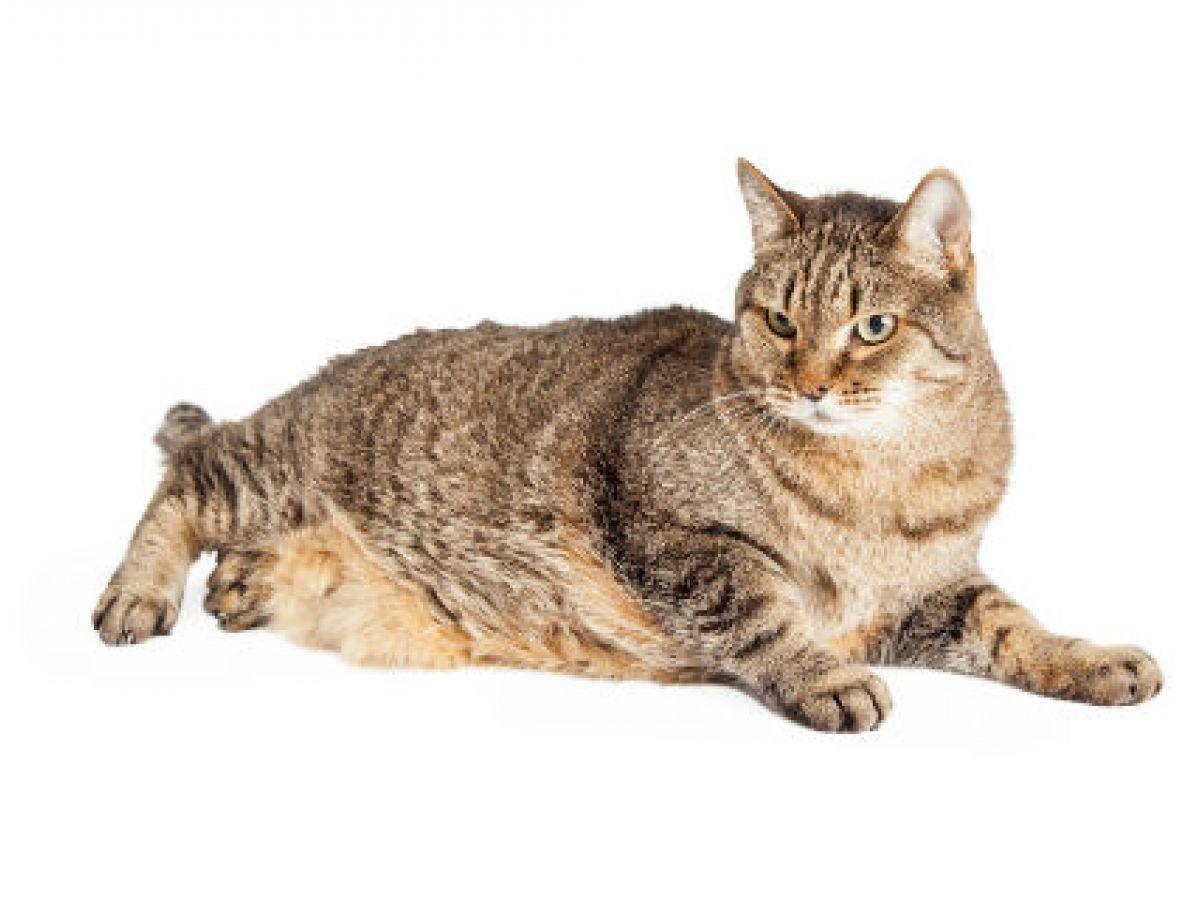 Atención a los problemas de sobrepeso en las mascotas
