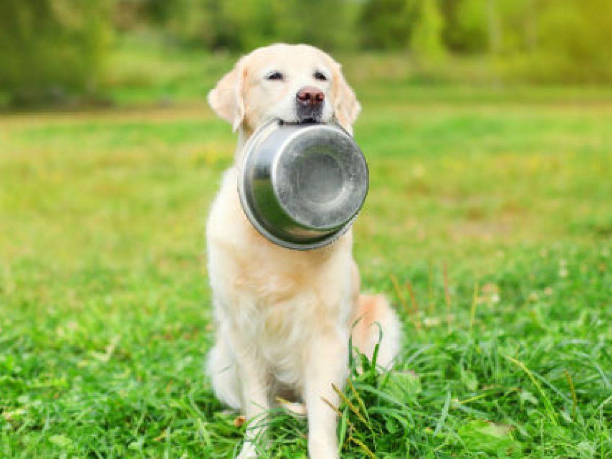 La dieta cruda para mascotas comienza a ganar seguidores
