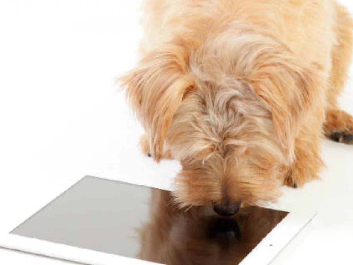 Ejercicios cerebrales son útiles para los perros