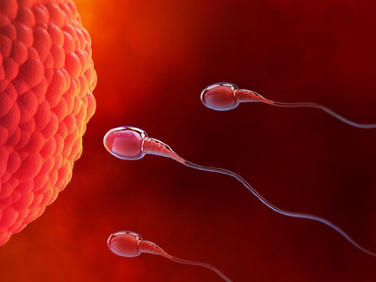 El conteo bajo de esperma podría ser indicio de riesgo cardiovascular o nivel alto de colesterol