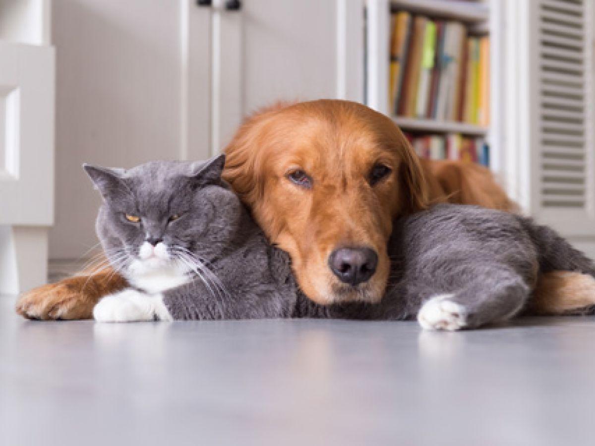 Animales que ayudan a sanar