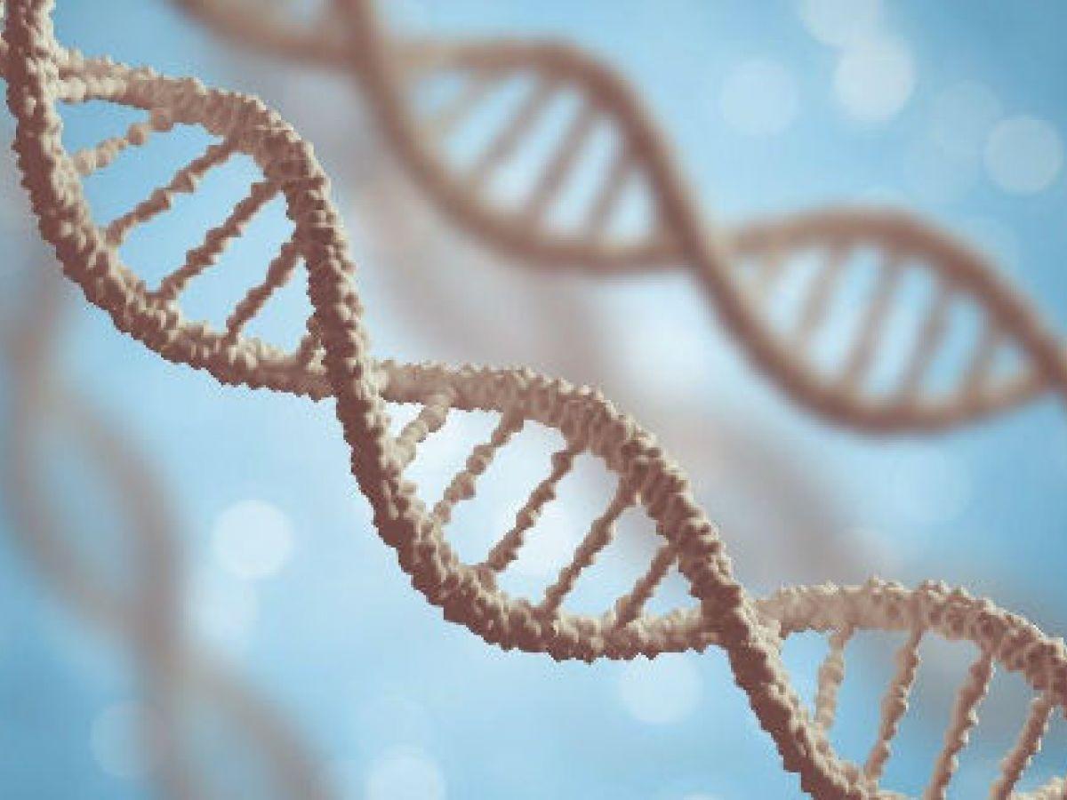 La genética del no heterosexual