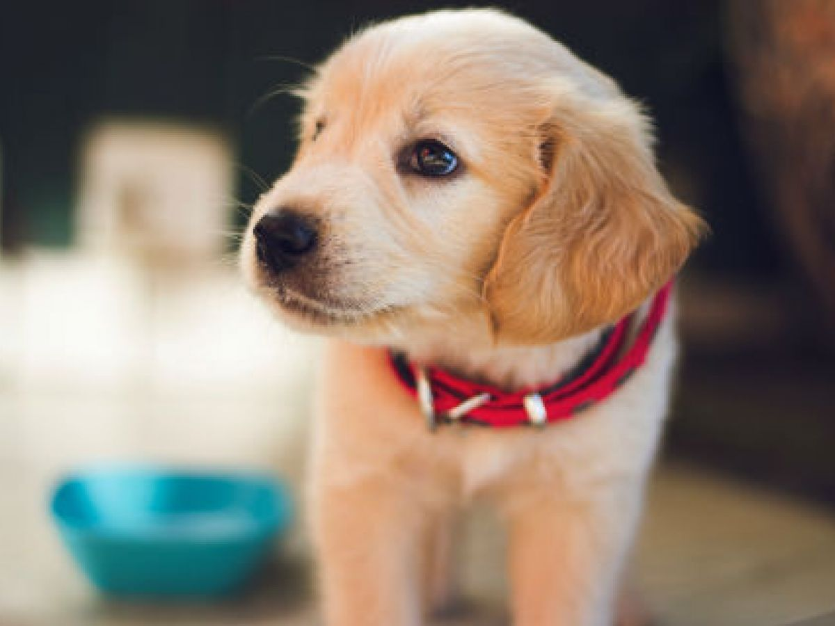 Cuida a tu mascota con aceite de coco y mejora su salud