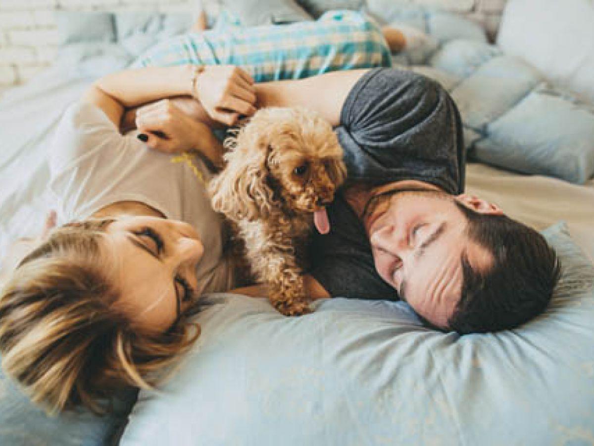 Cuando compartir la cama con tu mascota causa problemas de pareja