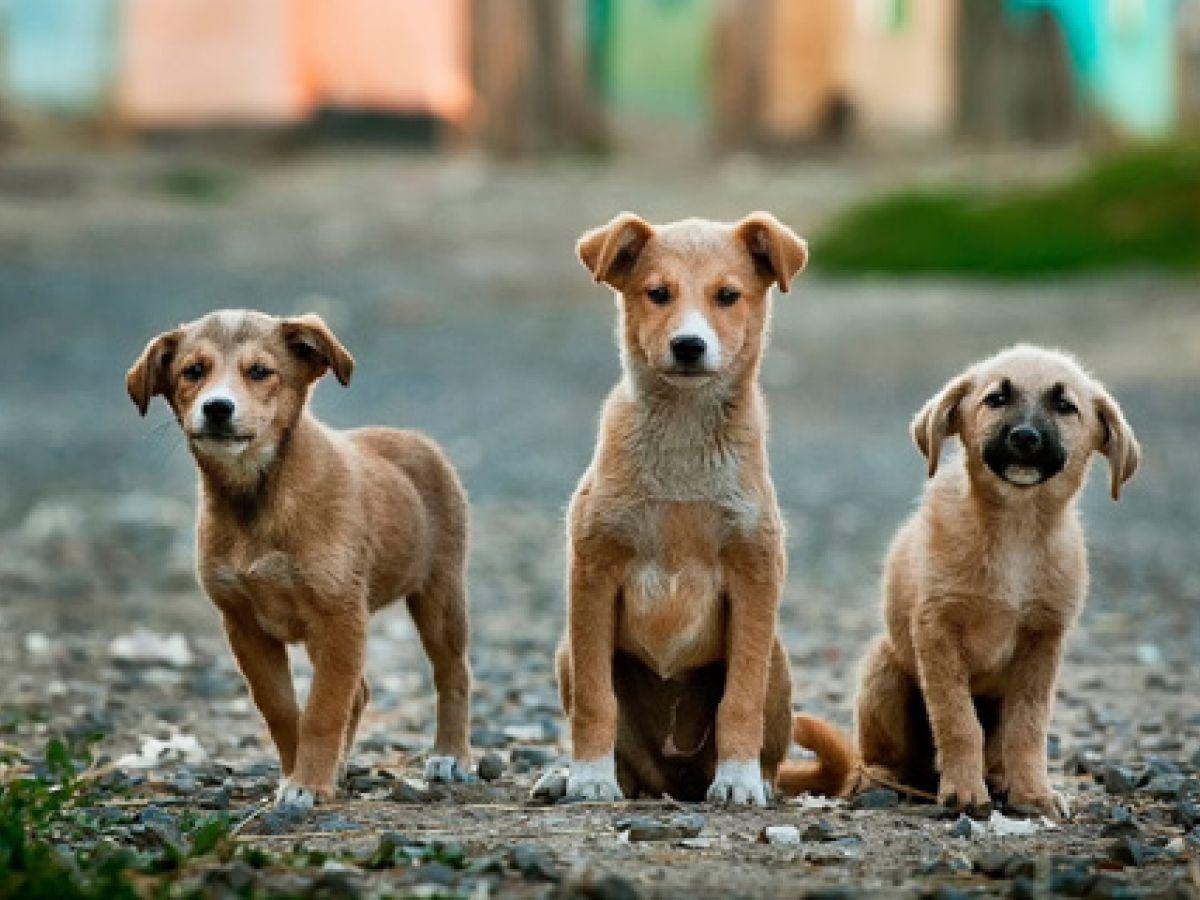 Presentan la experiencia de Holanda para resolver problema de sobrepoblación animal