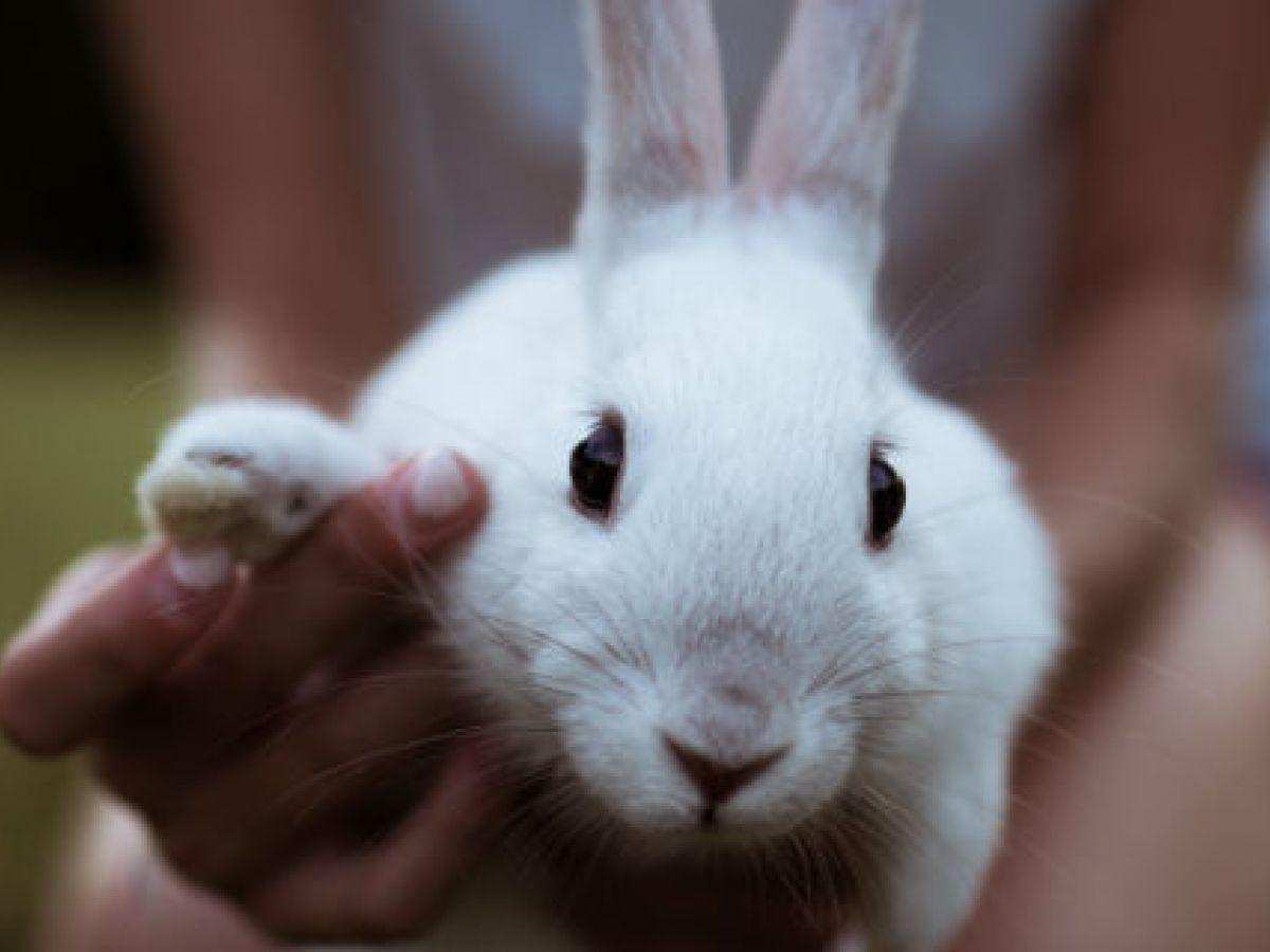 ¿Un conejo en casa?