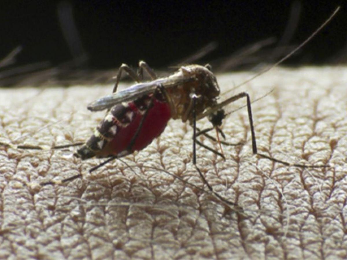 Aprueban la primera vacuna contra el dengue