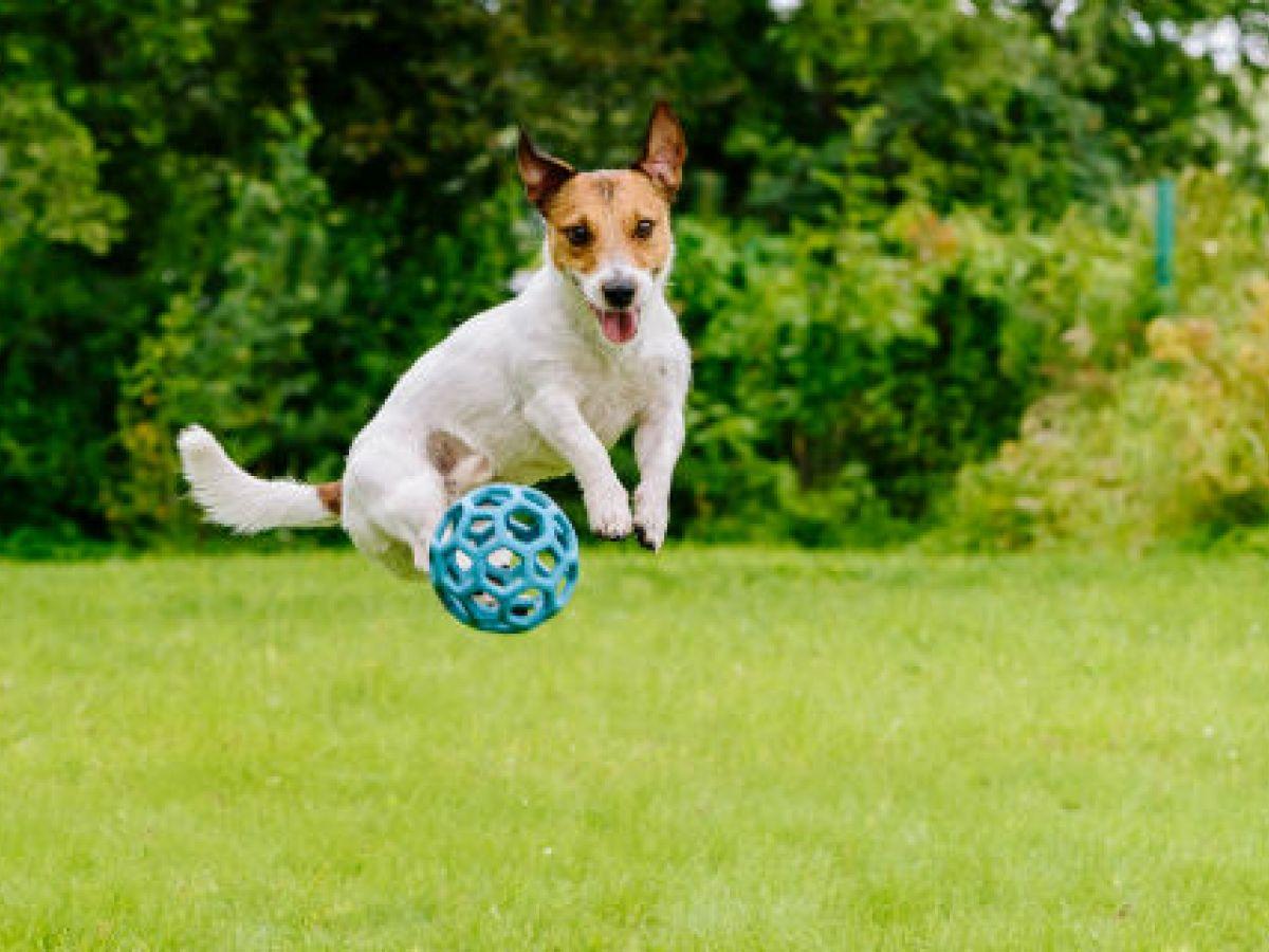 El ejercicio ideal para un perro dependerá principalmente de su raza