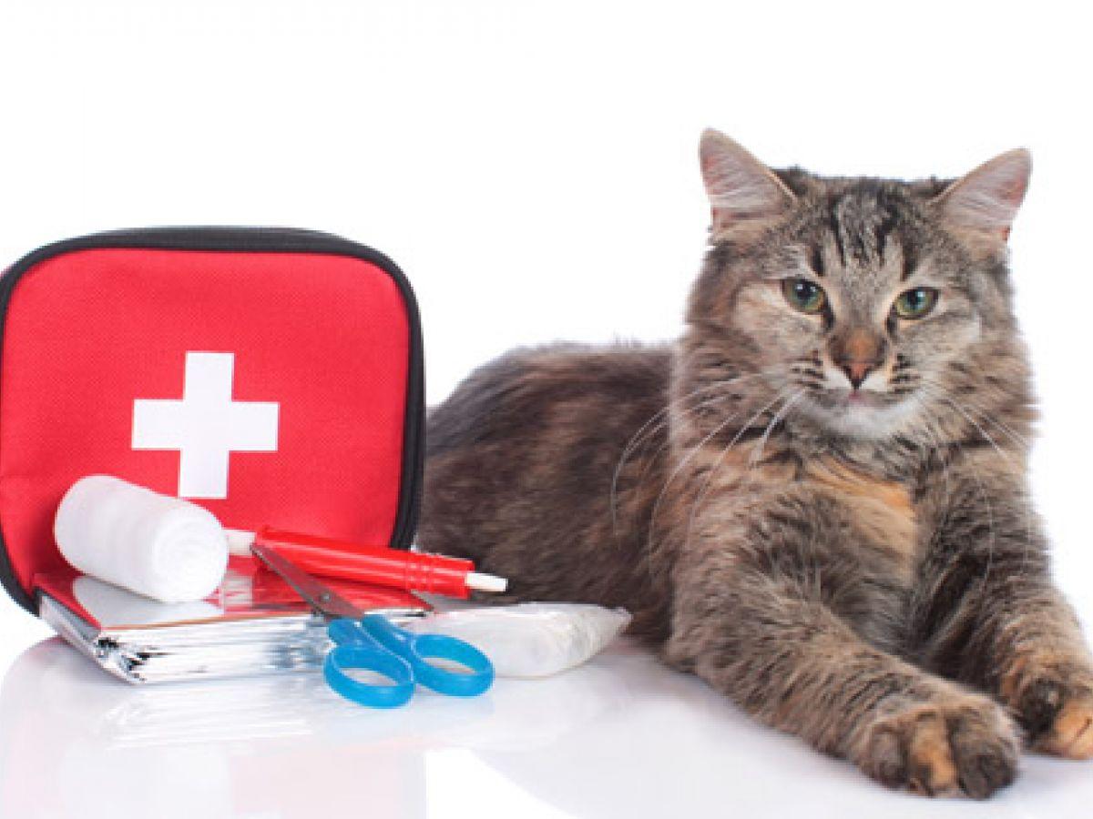 Plata diluida: un éxito para cuidar a tus mascotas