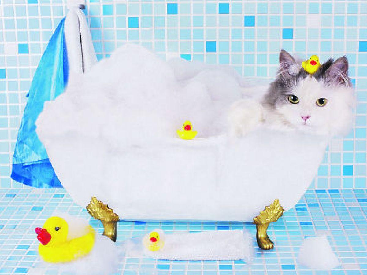 Ansiedad en los gatos