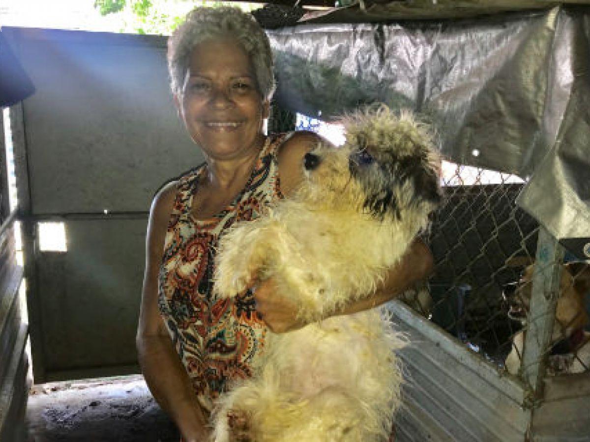 Amor y compromiso por los animales abandonados