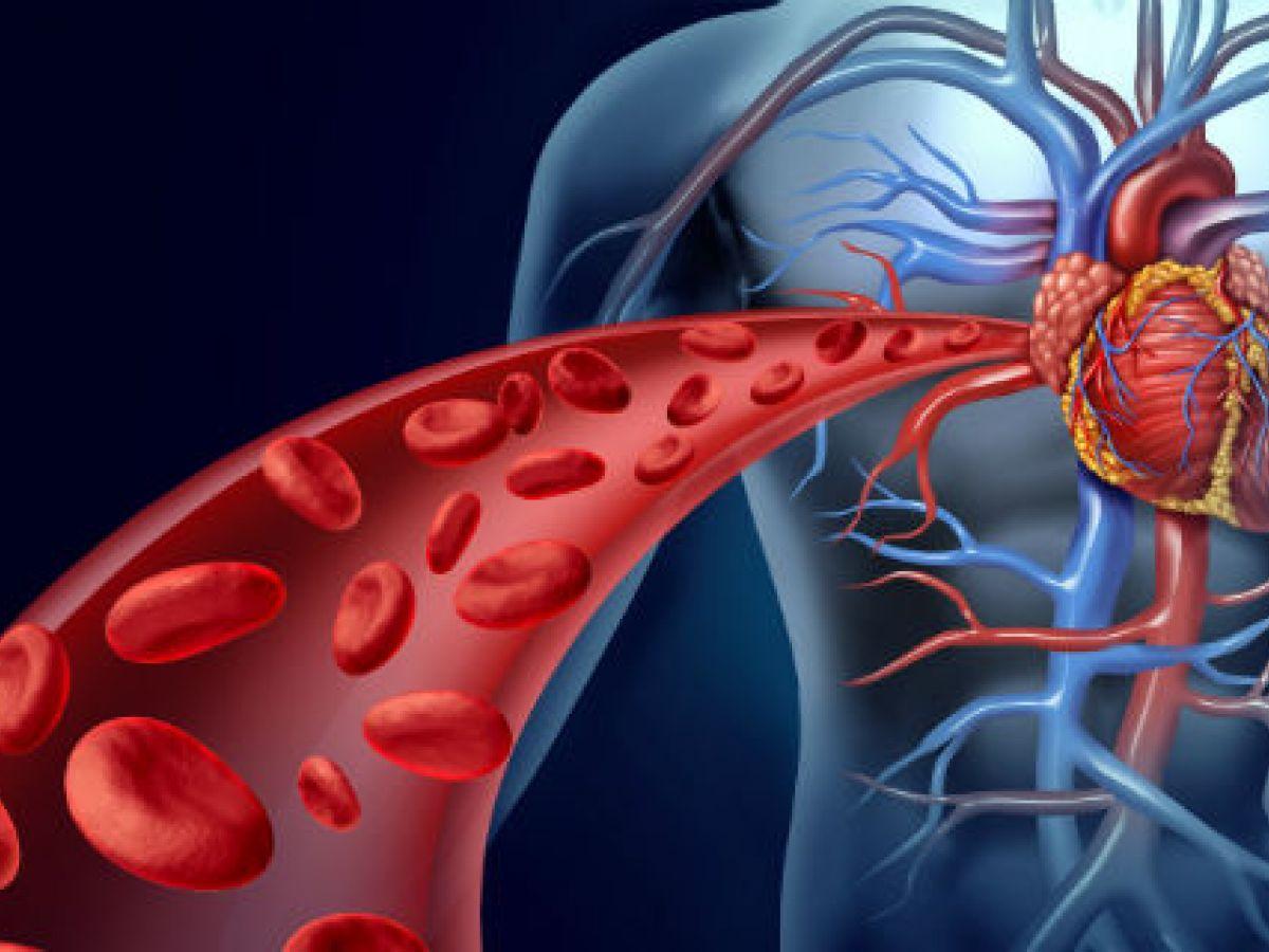 El corazón se fortalecería con células madre de alguien más joven