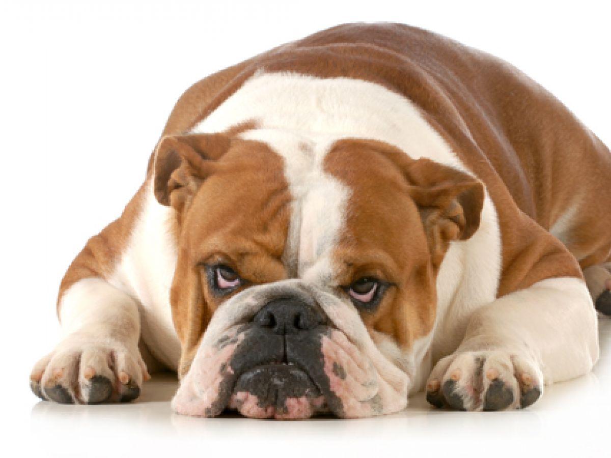 Los malos hábitos de las personas se reflejan en las mascotas