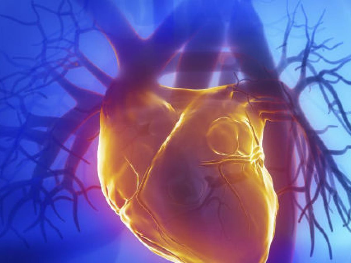 El uso de la luz mejora la función cardiaca después de un ataque