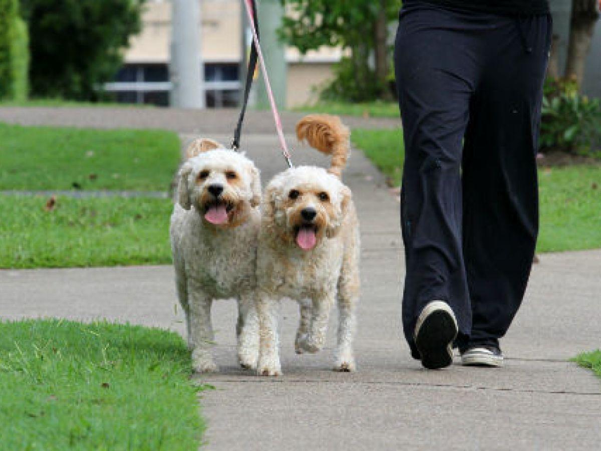 5 cuidados que debes tener cuando sales de paseo con tu perro