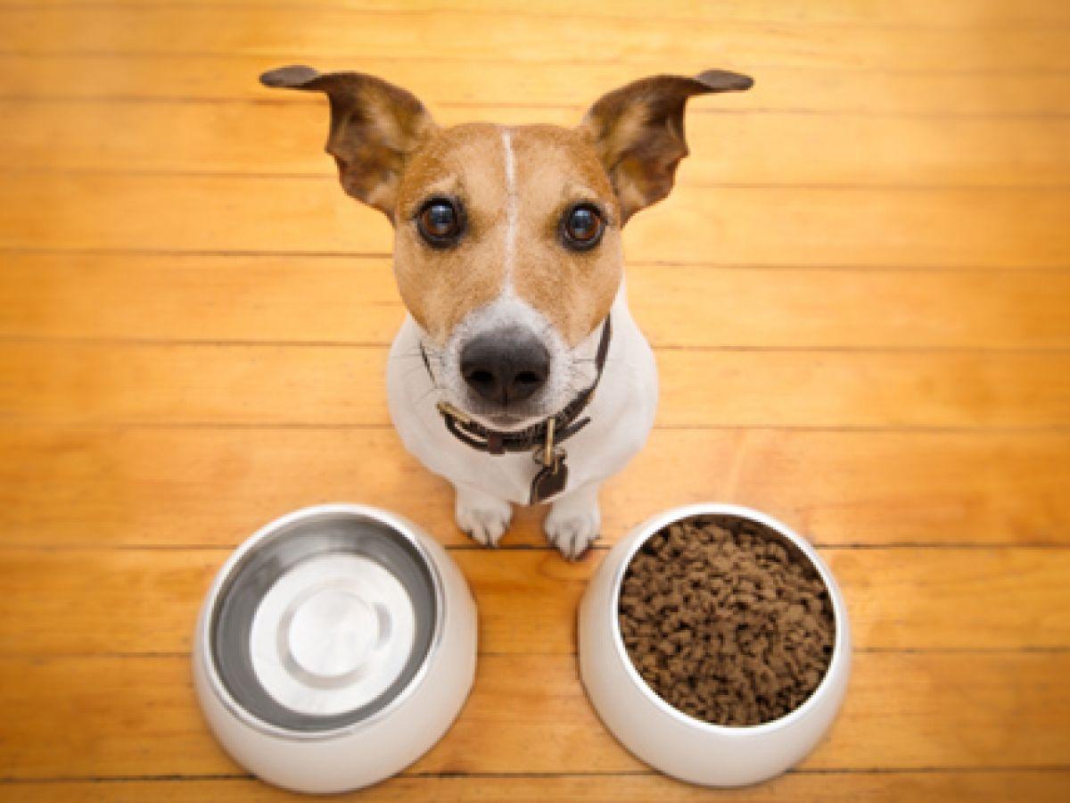Los perros son lo que comen