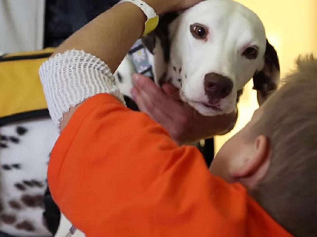 Universidad de Estados Unidos avala uso de perros terapéuticos en cuidados intensivos
