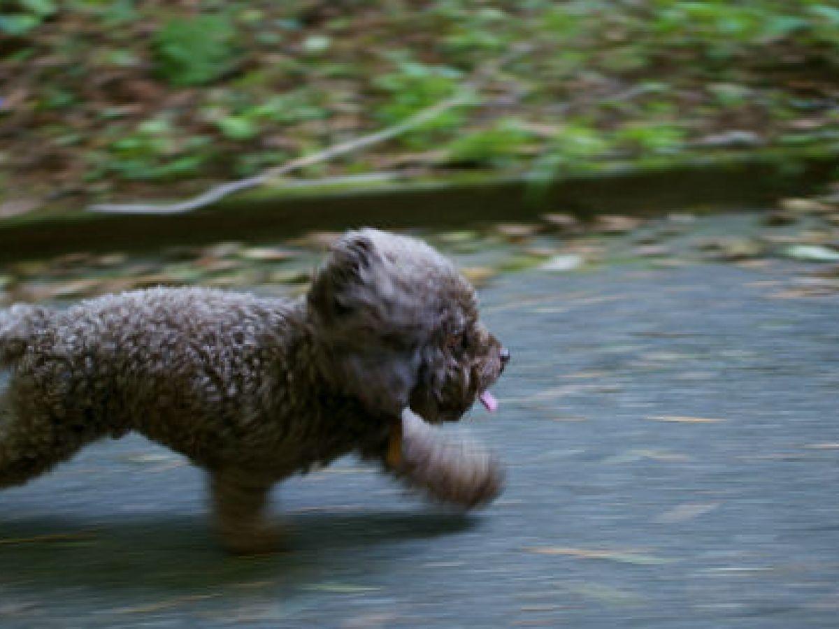 ¿Por qué los perros huyen de sus amos?