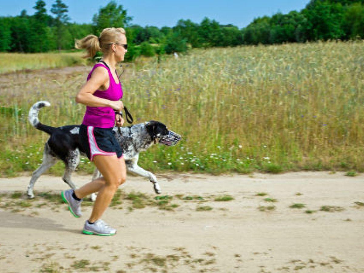 Manual para correr y entrenar con perros