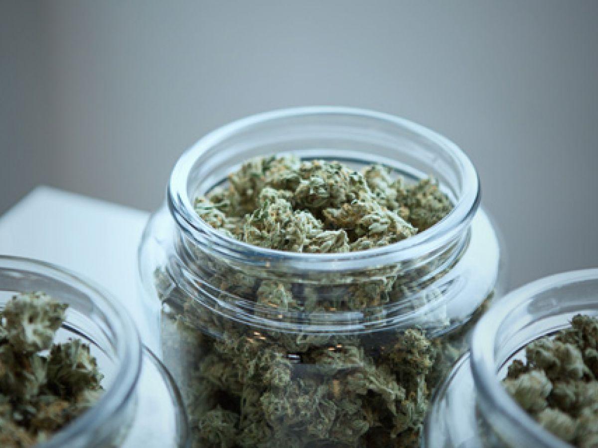 Expertos en Puerto Rico apuestan por el cannabis para contrarrestar efectos del alzhéimer