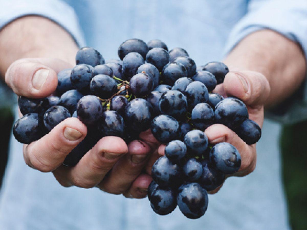 Molécula presente en vino tinto tiene propiedades para inhibir células cancerosas
