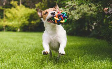 Fundamental el uso de los juguetes en las mascotas