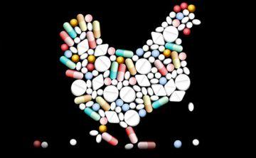 El uso de antibióticos para engordar pollos es en gran parte responsable de la resistencia a estos fármacos
