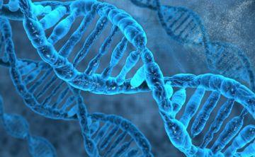 El éxito de una dieta también podría depender del ADN